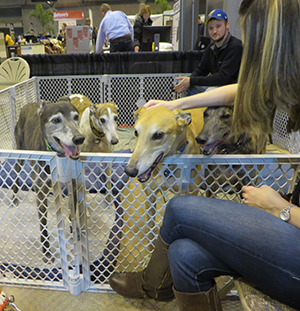 The 2017 St. Louis Home U0026 Garden Show Was A Big Success!!! Thank You SO  MUCH To All Our Volunteers, 2 Legged And 4 Legged!!!